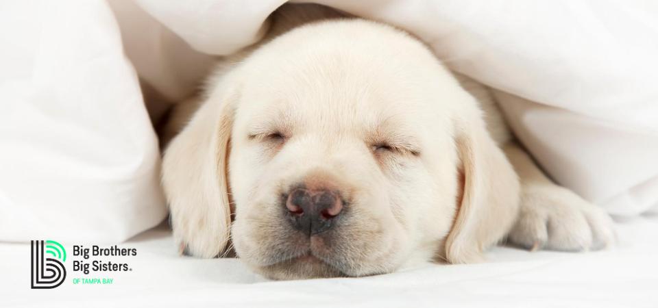 #WellnessWednesday Healthy Sleep